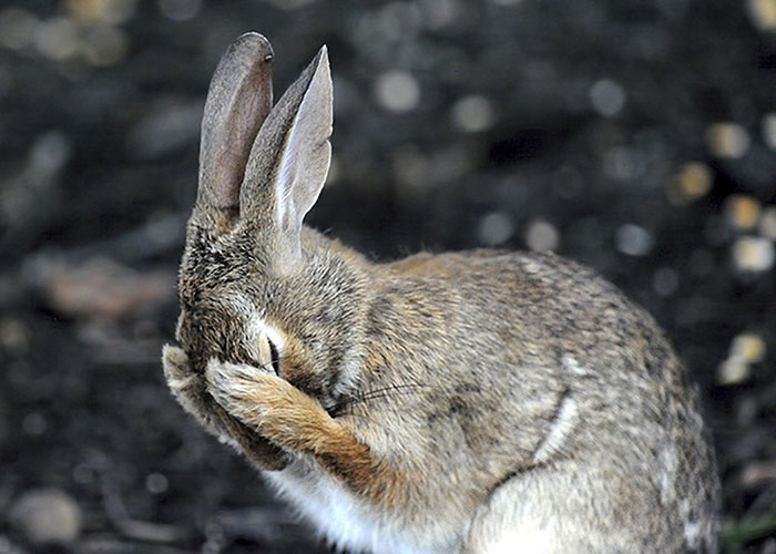 If One More Person Asks If I'm Having A Bad Hare Day... West Virginia By Daniel L. Friend