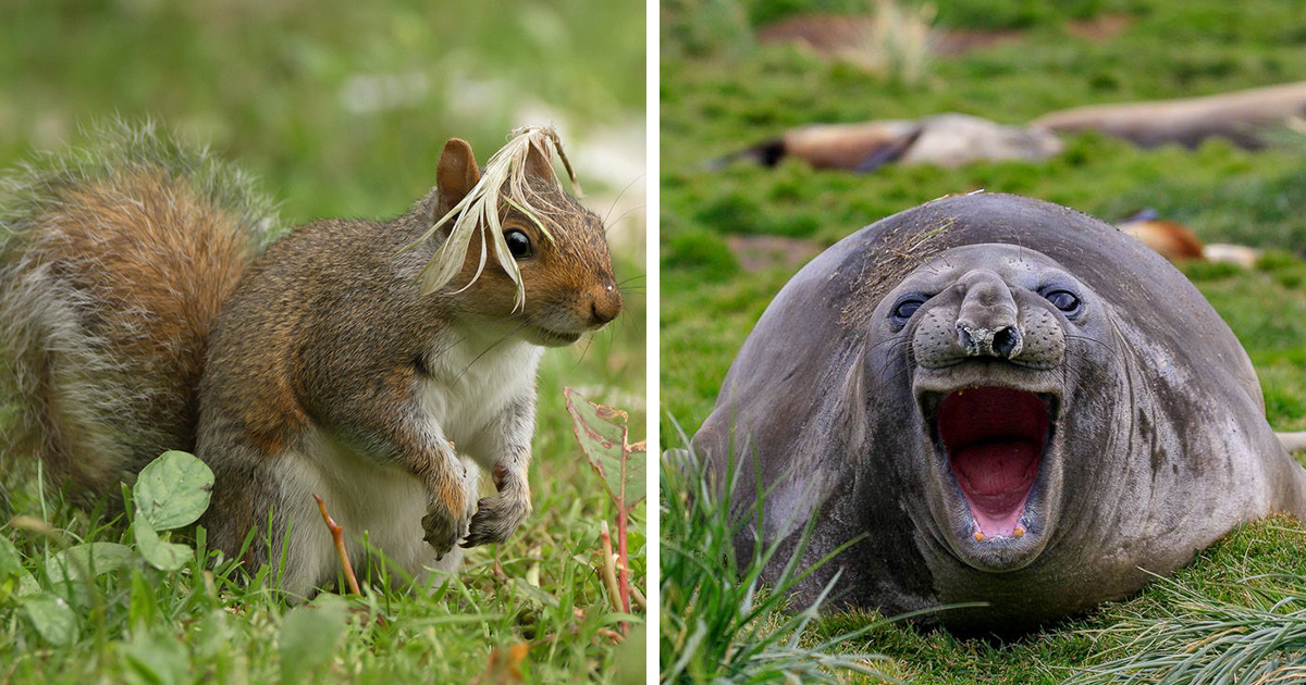 15+ Of The Best Entries For The Comedy Wildlife Photo