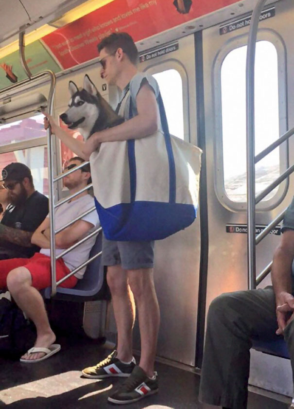 Dogs Are Not Allowed On NYC Subway Unless They're In A Carrier. So This Happened