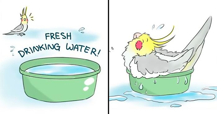 Artist Draws Comics About Her Pet Bird And Theyre Too