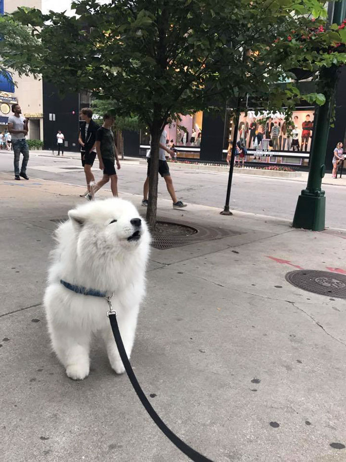 Smol Cloud Does An Awoo