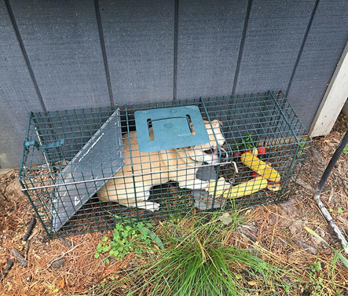 Intentaba cazar a una marmota y pillé al perro de los vecinos