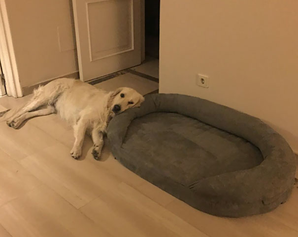 $100 Bed