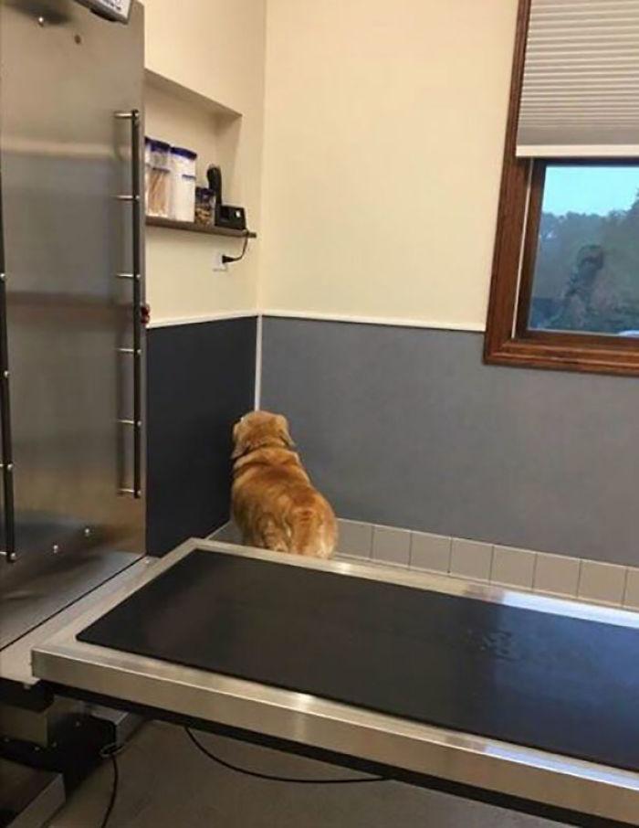 Si él no puede ver al veterinario, el veterinario no le ve a él
