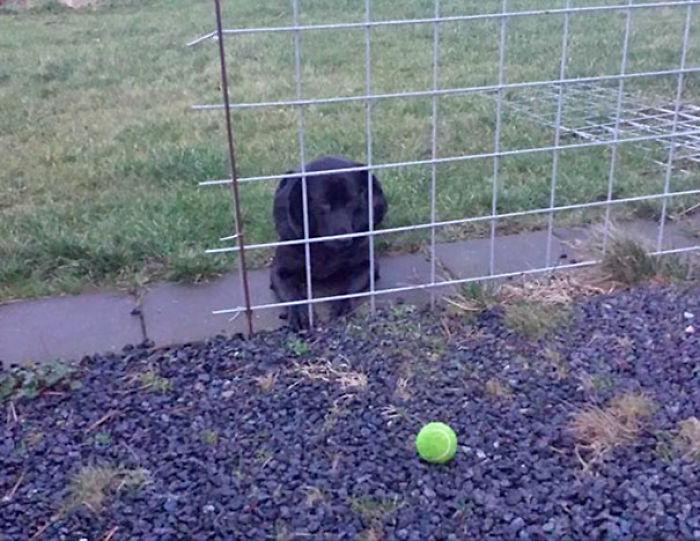 He vuelto a casa y me he encontrado al perro esperando así