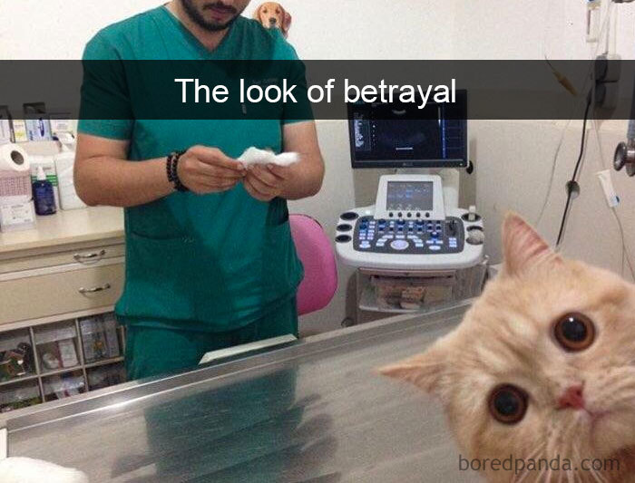 Image of: Dog Snapchats Funny Cat Pics Bored Panda 126 Hilarious Cat Snapchats That Will Leave You With The Biggest