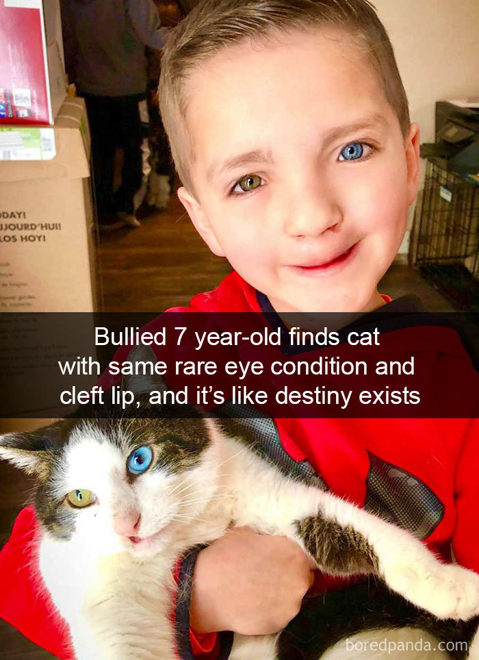 Image of: Bored Panda Hilarious Cat Snapchats That Will Leave You With The Biggest Smile Fun Chinadaily Forum Chinadaily Forum Hilarious Cat Snapchats That Will Leave You With The Biggest Smile