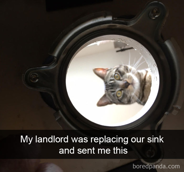 Funny-Pics-Cat-Snapchat