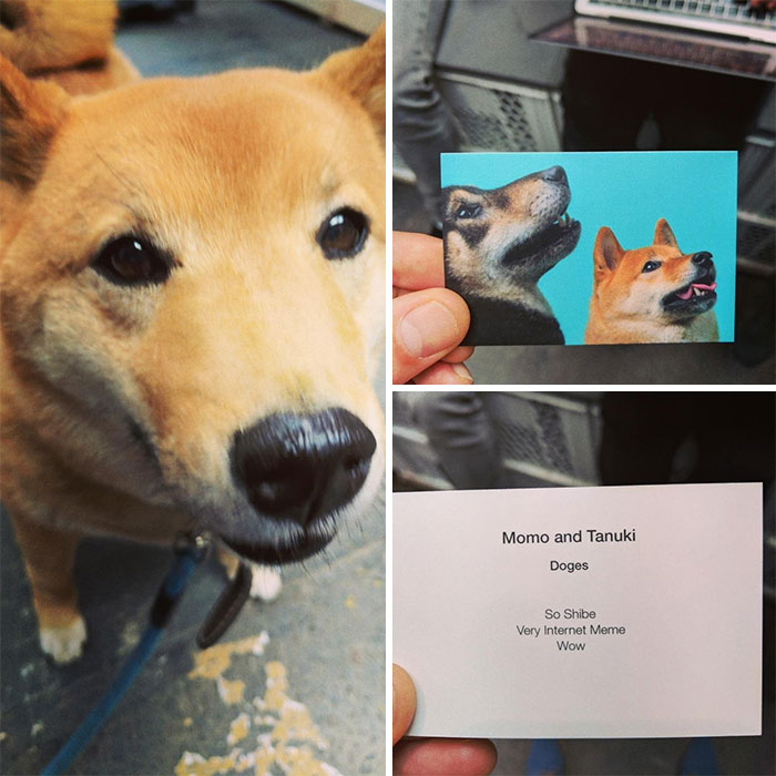 Ran Into A Guy On A Conference With A Doge He Handed Me This