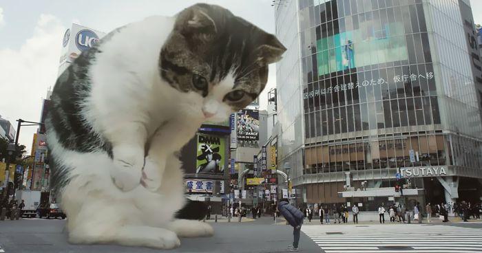Download 100+  Gambar Kucing Raksasa Lucu Terbaik Gratis