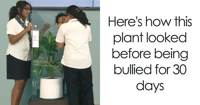 IKEA Asks People To Bully This Plant For 30 Days To See What