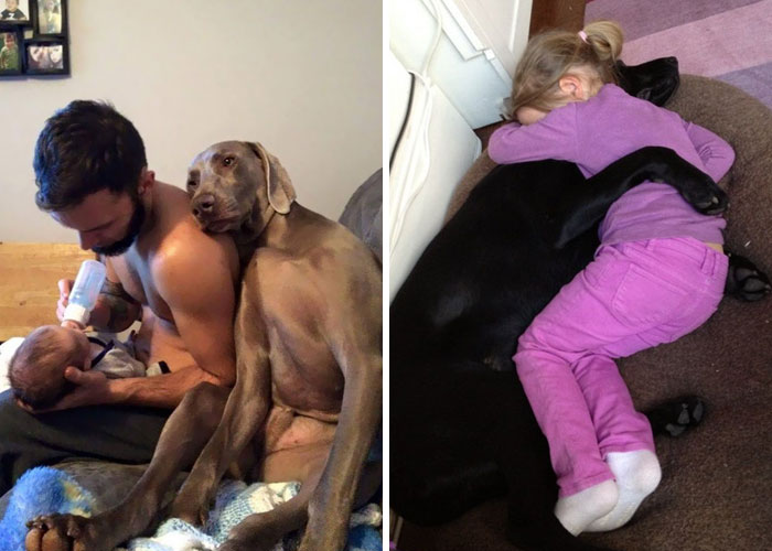148 Examples Of Unconditional Doggo Love That Will Melt Your Heart
