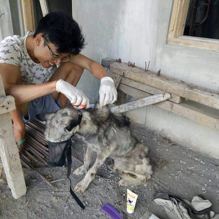 This Husky Was Found So Malnourished She Looked Like A Skeleton, 10 Months Later She's Unrecognizable