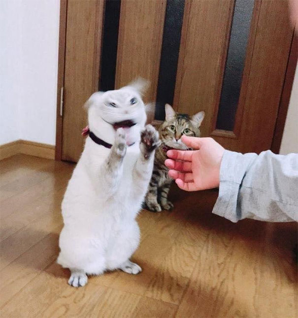 Cat Is Possessed By The Devil