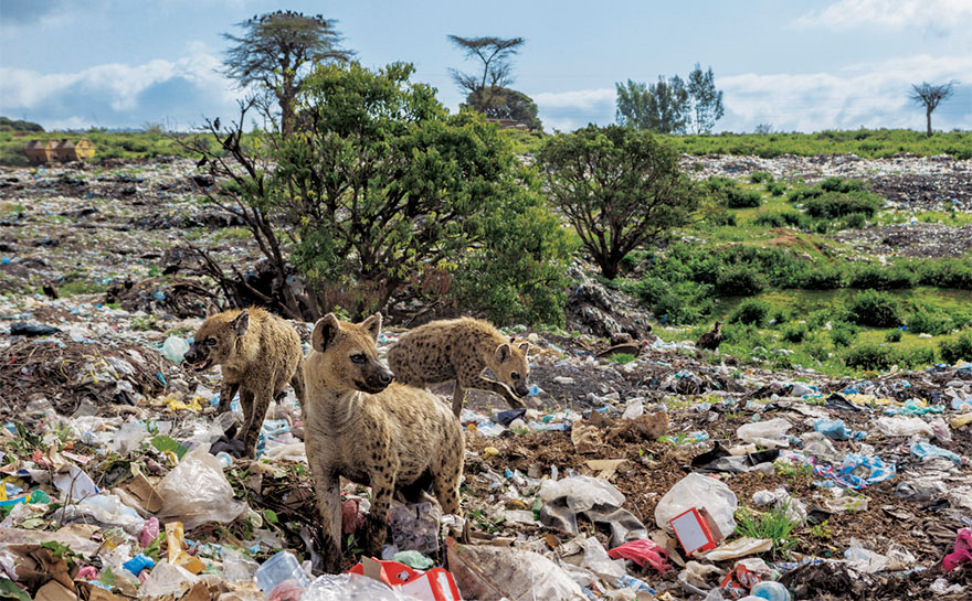 plastic-crisis-impact-on-wildlife-national-geographic-june-issue-cover-7-5afd84c063ede__880.jpg