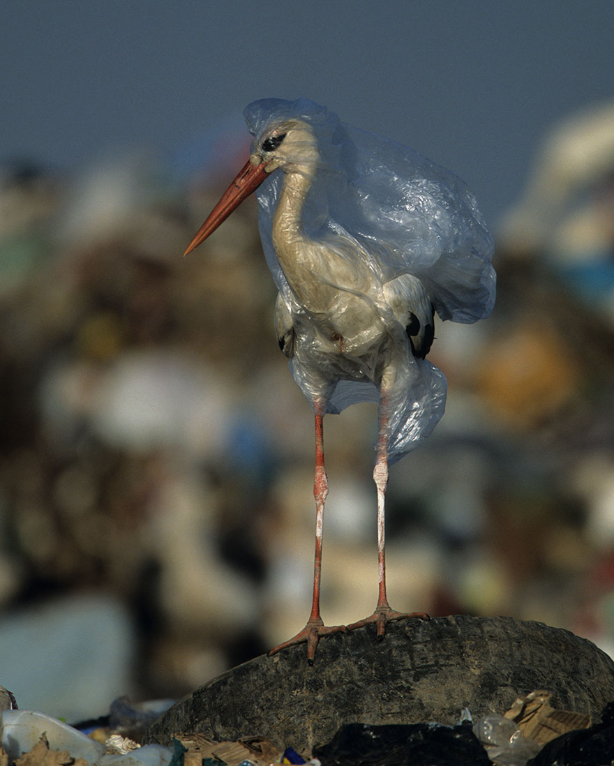 plastic-crisis-impact-on-wildlife-national-geographic-june-issue-cover-9-5afd83f808949__880.jpg