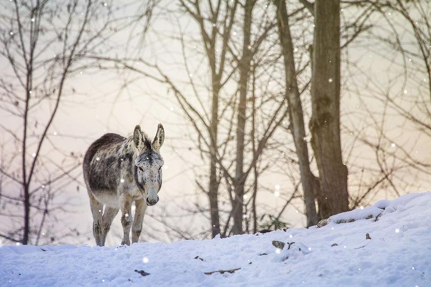 Baby In Winter Fairyland