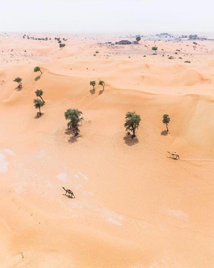 Wandering (Dubai, United Arab Emirates)