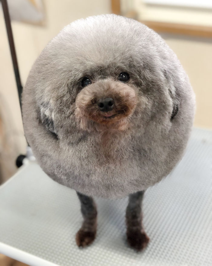 These Dogs Look Extremely Cute After Going To A Salon In Japan