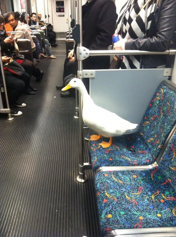 I Saw A Duck On The Train Man. It Was Too Much Man