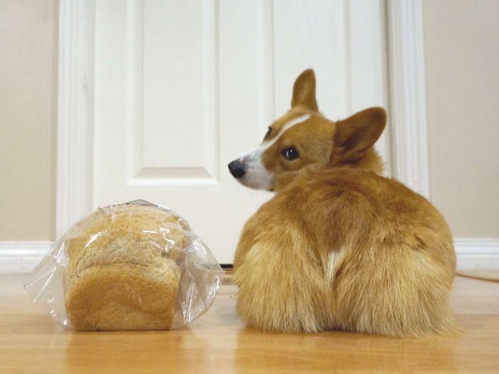Corgi Loaf