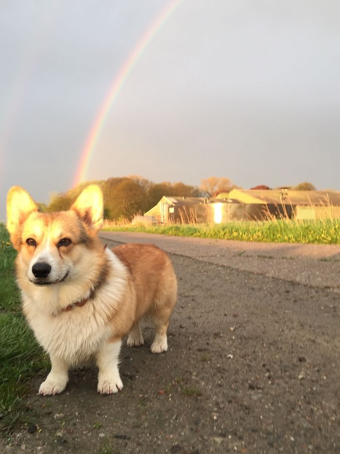 Corgi Is Power, Corgi Is Truth