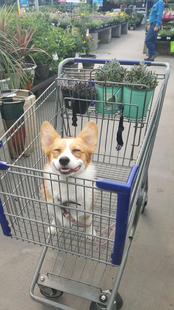 I Think She Likes Succulent Shopping With Me