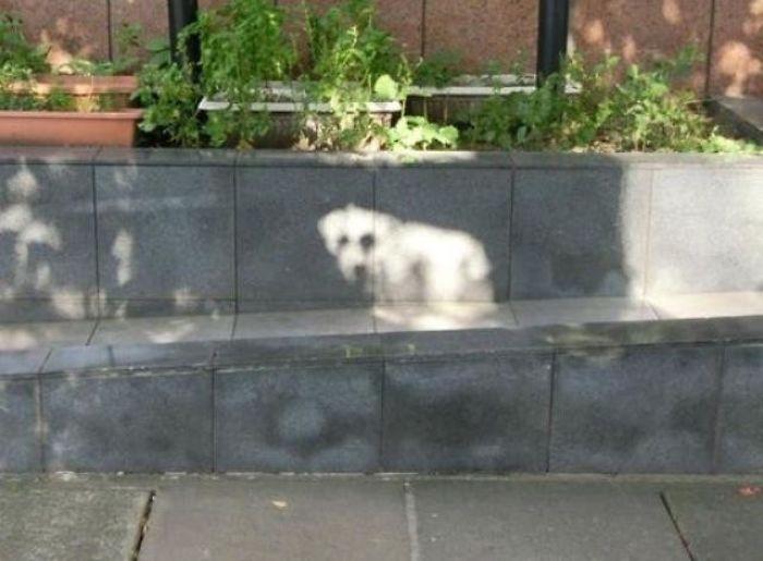 Why Hello, Little Sundog