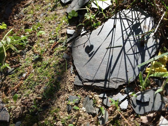 The Way A 4 Leaf Clover Made A Heart Shadow