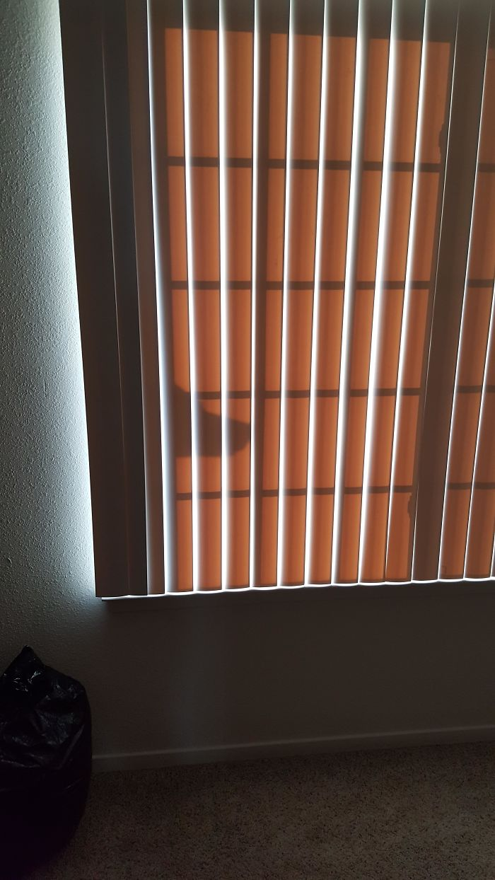 This Shadow On My Third Floor Apartment's Window Looks Like A Lab Just Sneaking A Peak
