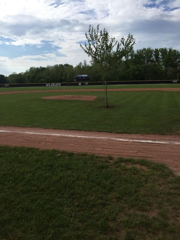 High School Pranksters In Ohio Planted A Tree In The Middle Of The Baseball Field