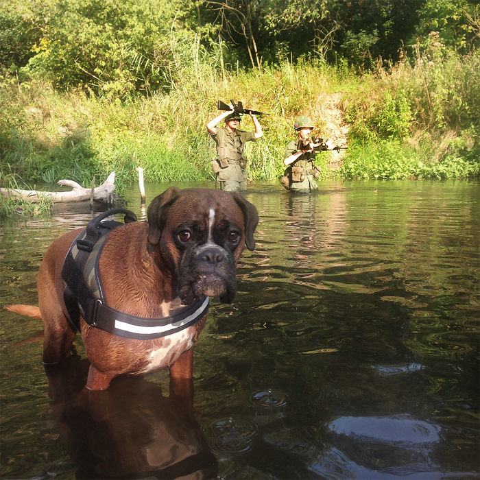I Took My Boxer For A Walk In Poland. Then Vietnam Happened