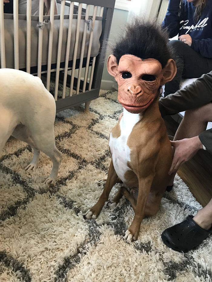 Terrifying Boxer