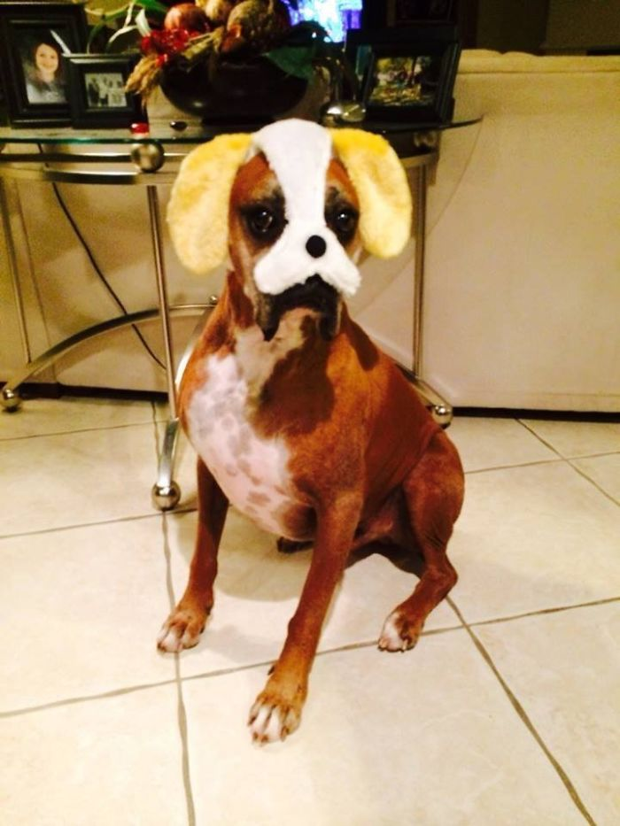 My Sister's Boxer Is Cleverly Disguised