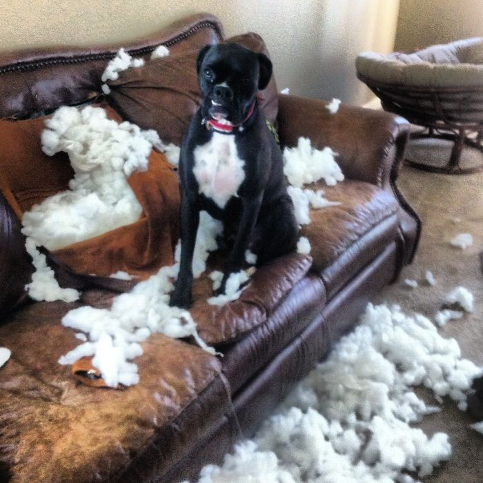 My Shameful Boxer