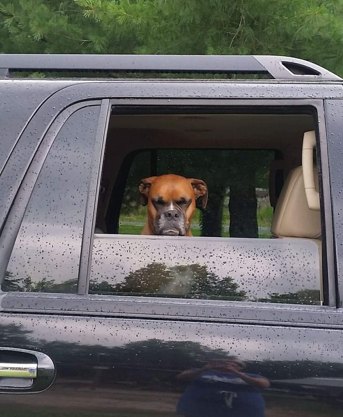 My Friend's Dog Is Not Happy About Leaving The Dog Park Early