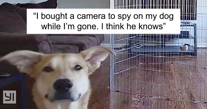 Snap Chats 50 Hilarious Dog Snapchats That Are Impawsible Not To Laugh At part 5 Bored Panda 50 Hilarious Dog Snapchats That Are Impawsible Not To Laugh At part