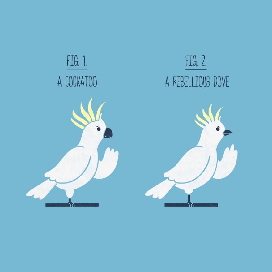 Cuckatoo Or Rebel Dove