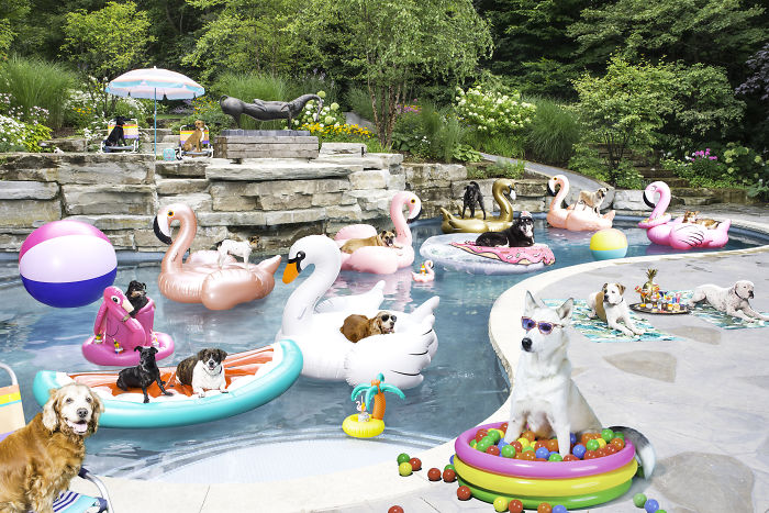 I Photographed A Pupper Pool Party!