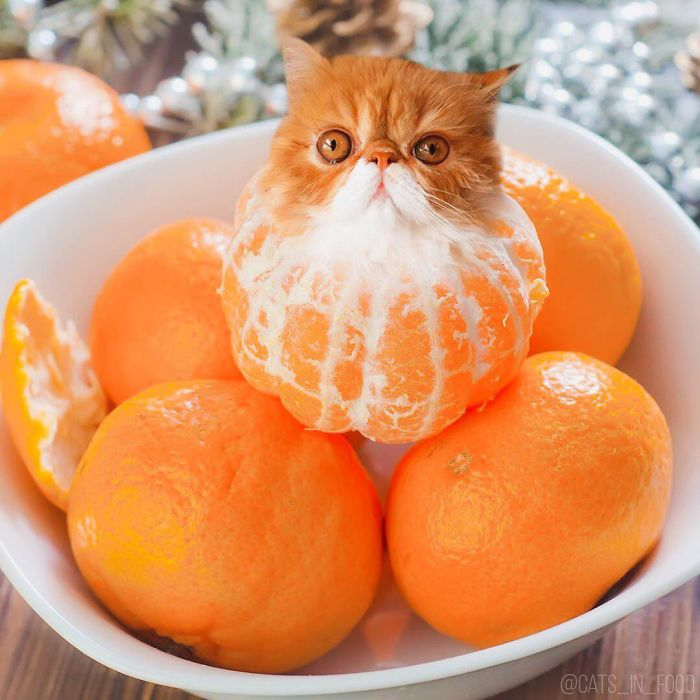 I Photoshop Cats Into Food