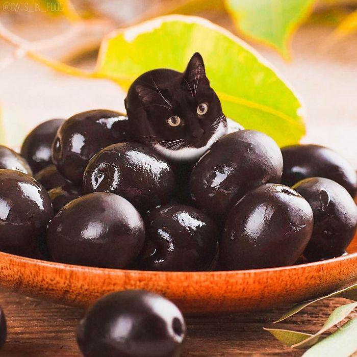 I Photoshop Cats Into Food