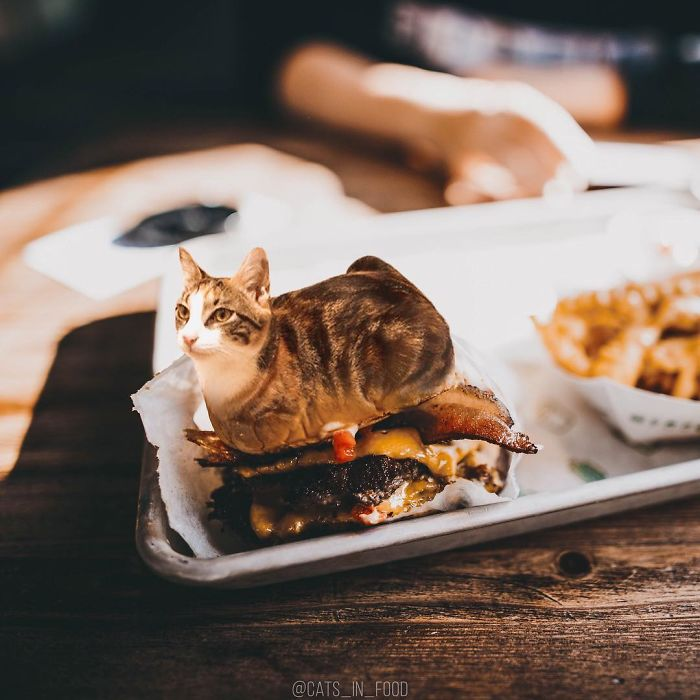 I Photoshop Cats Into Food Success Life Lounge