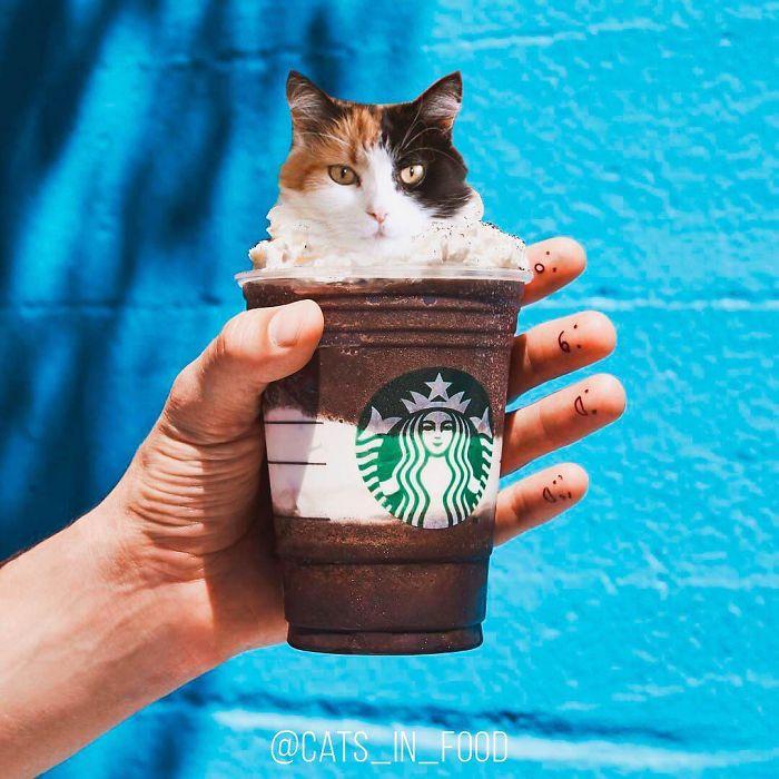 I Photoshop Cats Into Food Bored Panda