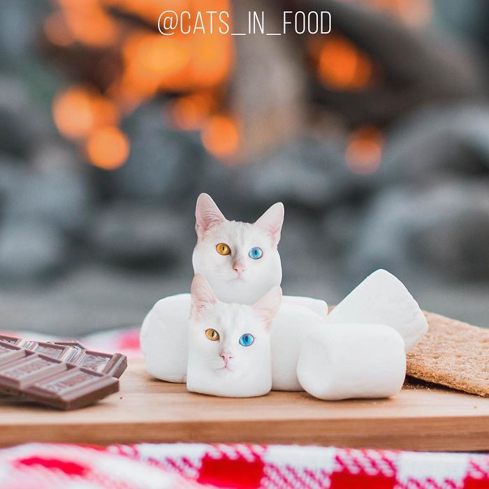 I Started Photoshopping Cats Into Food And Somehow Ended Up Getting