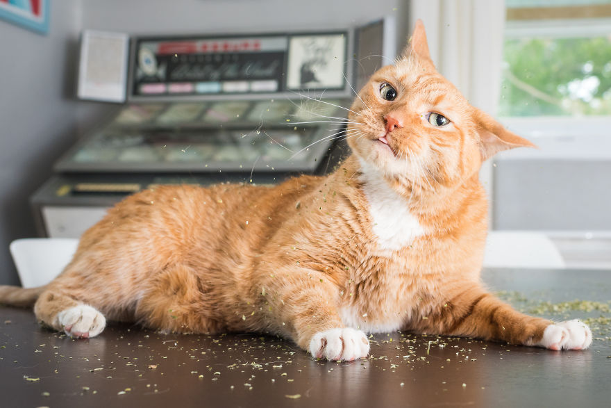 I Take Photos Of Cats High On Catnip.