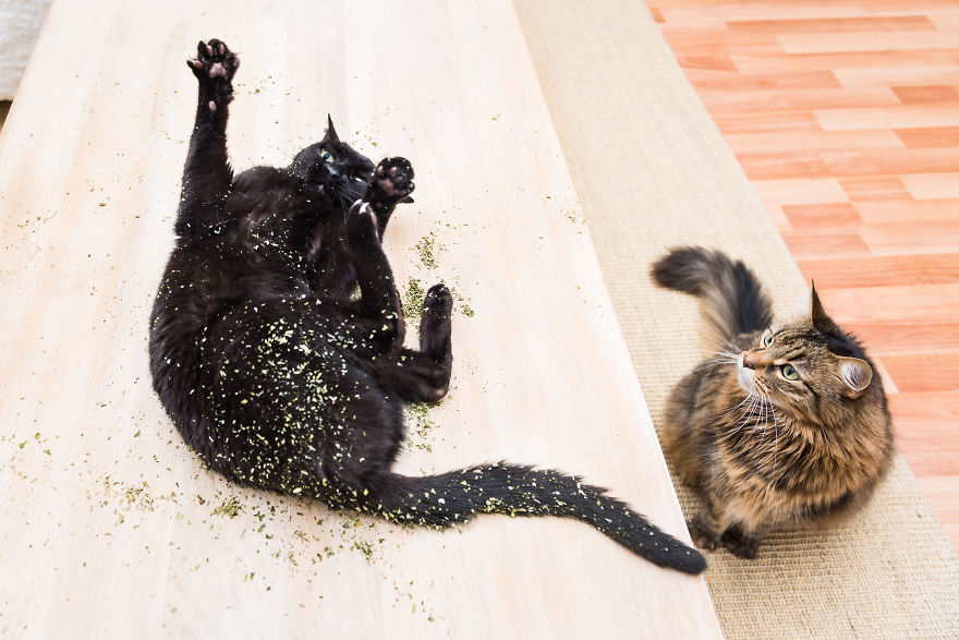Забавные фото кошек
