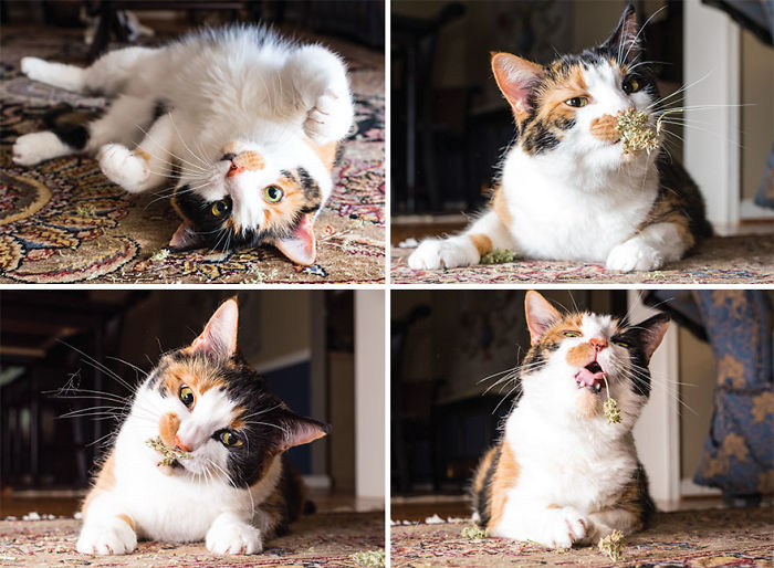 I Take Photos Of Cats High On Catnip.
