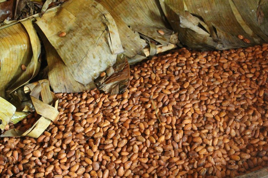 I'm A Chocolate Maker, And Here's How The Chocolate is Made From Bean To Bar