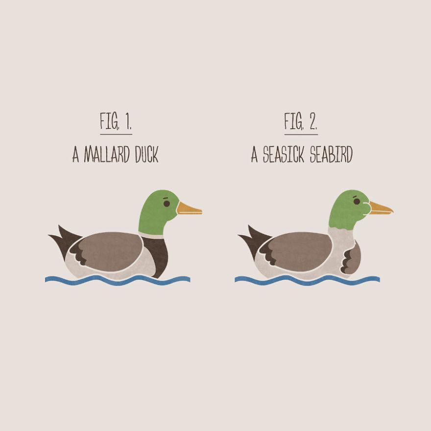 Mallard Or Seabird