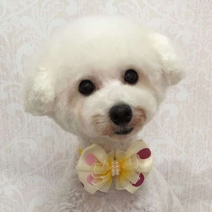 62 Dogs That Had The Makeovers Of Their Lives Done By